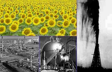 Champ de tournesol et champ de pétrole